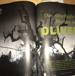 Das rätselhafte Sterben der Olivenbäume (GEO 12/2019)